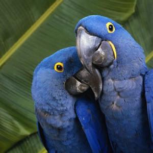 Parrots_Face